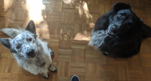 Batou and Motoko